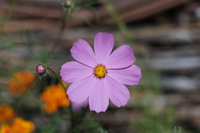 Еще цветочек