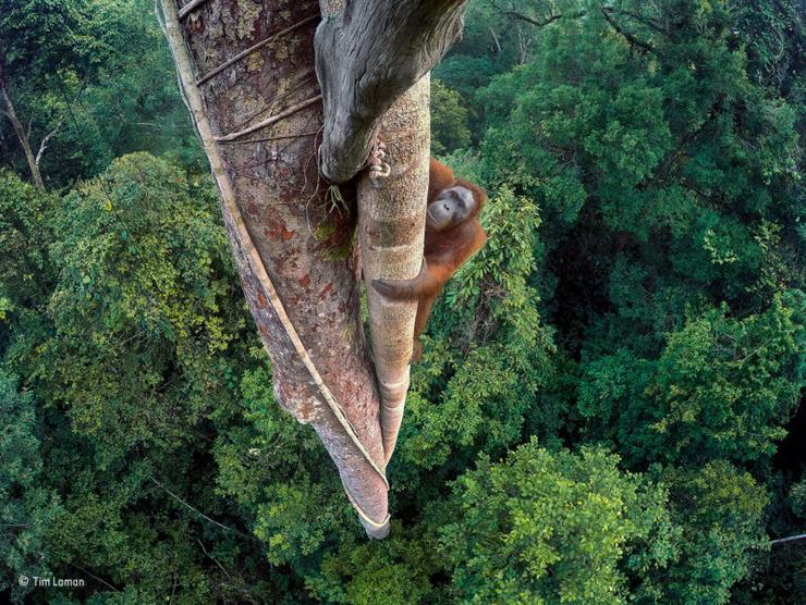 лучшие фотографии дикой природы