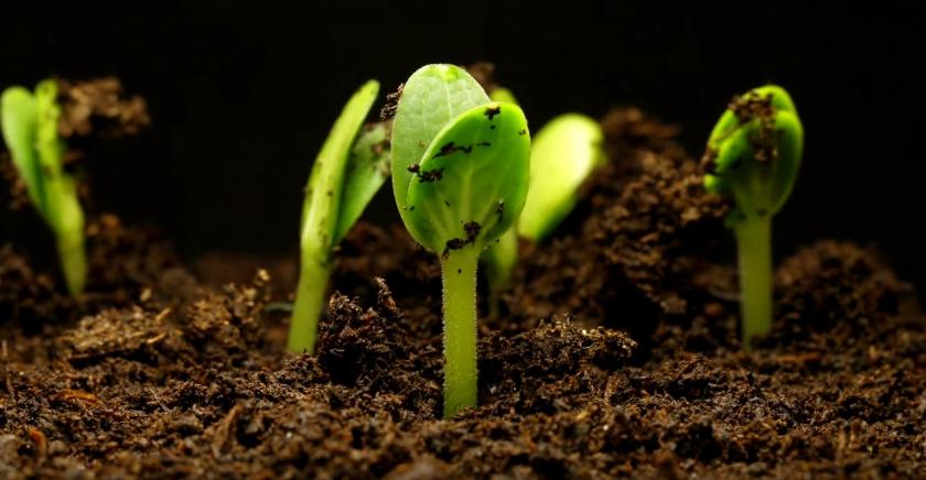 Танец растений — таймлапс