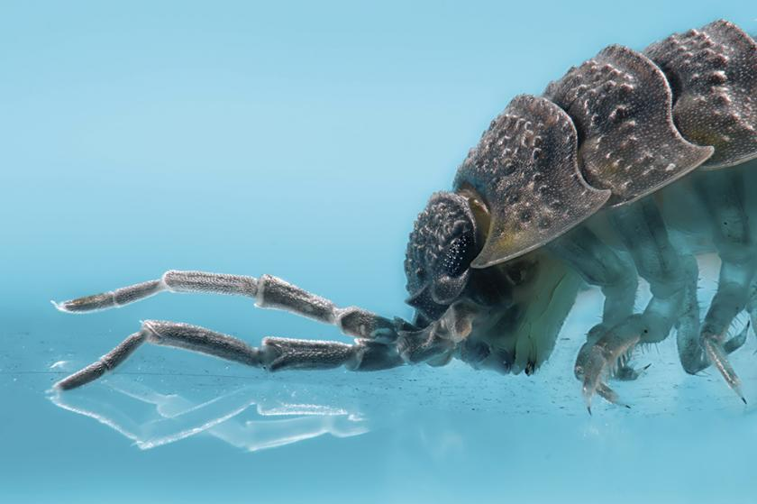 Макросъемка насекомых с использованием техники стекинга