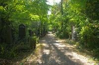 Куреневское кладбище