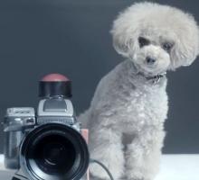 Необычный эксперимент— собака фотограф