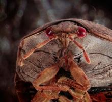 Фотографии насекомых который живут у вас дома