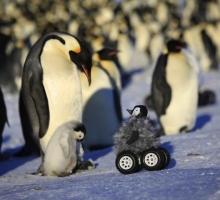 BBC использует пингвин-камеры для съемки животных