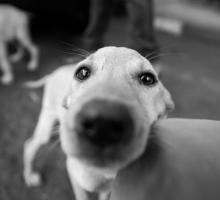 Фоторепортаж спасение собак