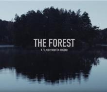 Лес — таймлапс путешествие по неизведанной Норвегии
