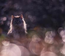 Волшебный мир природы глазами Вячеслава Мищенко