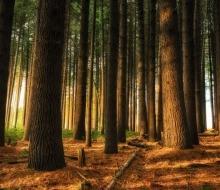 Как фотографировать магические пейзажи