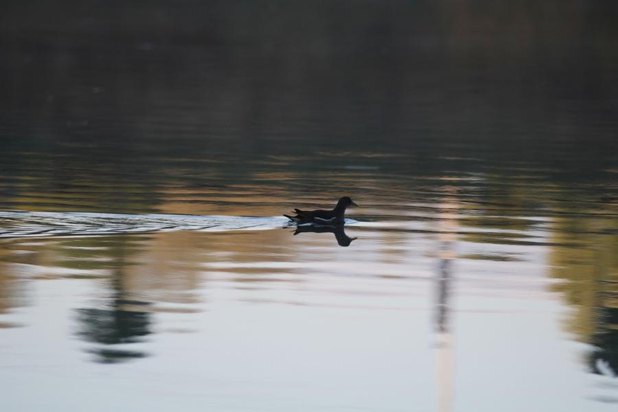 Утром на озере