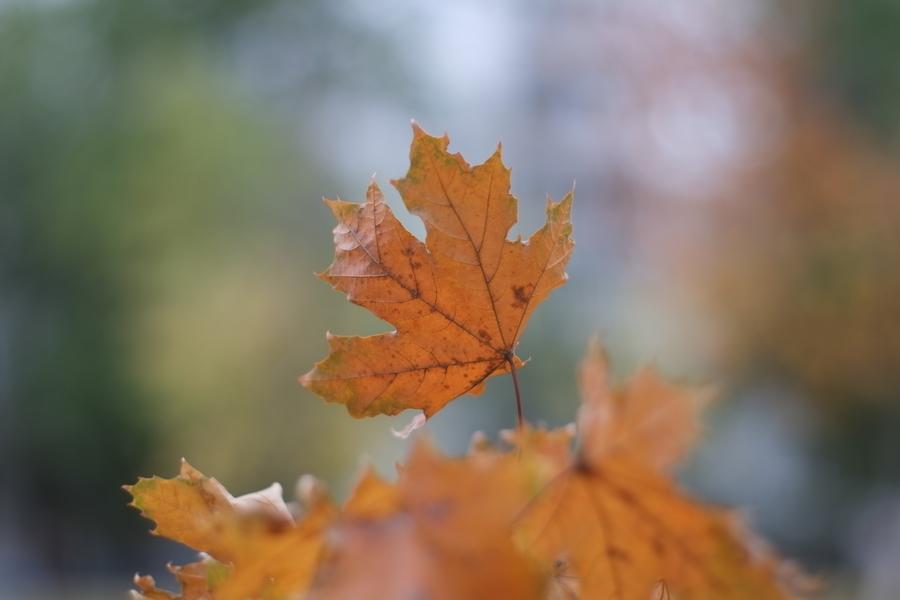 Осень пришла