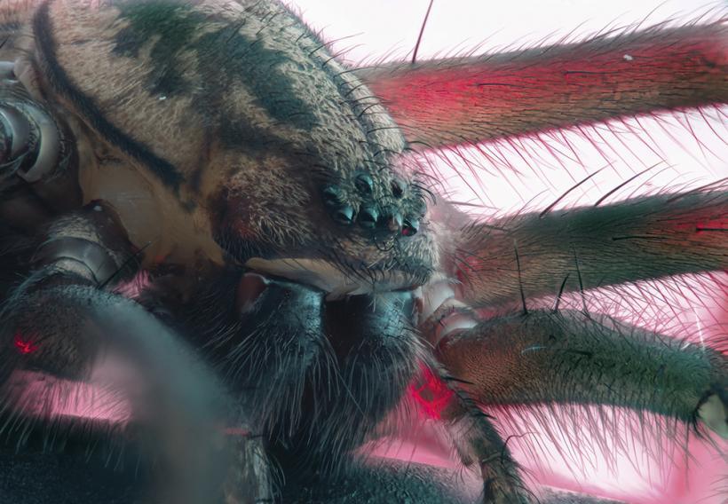 Фотографирование насекомых