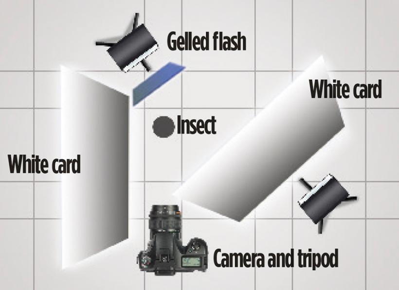Схема освещение при макросъемке насекомых